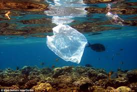 Plastic Waste and How it is Endangering Our Marine Life