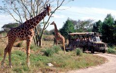 Trip Through the Safari